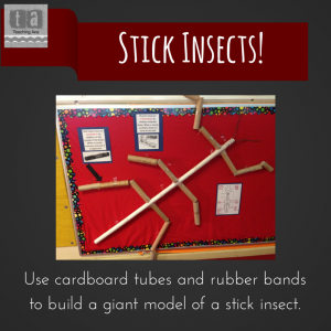 Use cardboard tubes and rubber bands to (1)